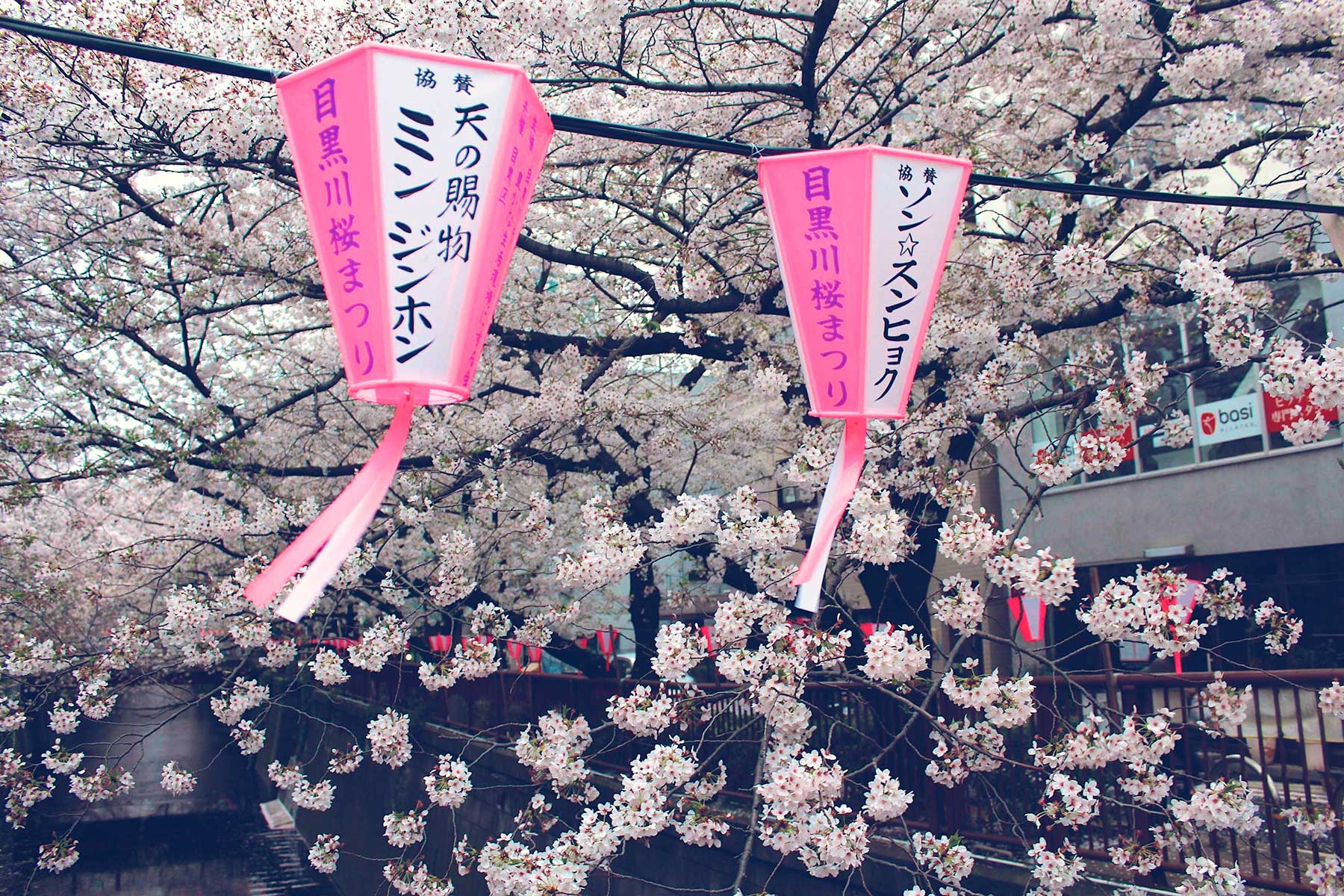 Sakura Spotting in Tokyo, Kawagoe, and Odawara, Japan - PearlMargaret.com